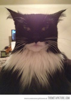 This cat looks like Batman…