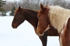 Horses.....Winter friends