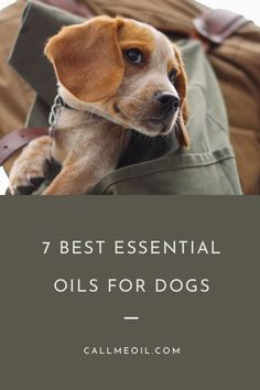 Aromatherapy is the easy practice of awakening your senses with natural oils. In fact, you've probably experienced the benefits of Aromatherapy without even recognizing it! Essential Oils For Inflammation, Copaiba Essential Oil, Essential Oils Dogs, Essential Oils For Headaches, Essential Oil Diffuser Blends, Young Living, Oils For Dogs, Aromatherapy Oils, Pet Care