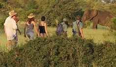 Find the type of Kruger park vacation package best for you