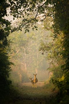 Deer framed by a woodland opening at Sage Farm. Beautiful Creatures, Animals Beautiful, Beautiful World, Beautiful Places, Simply Beautiful, All Nature, Walk In The Woods, Belle Photo, Woodland
