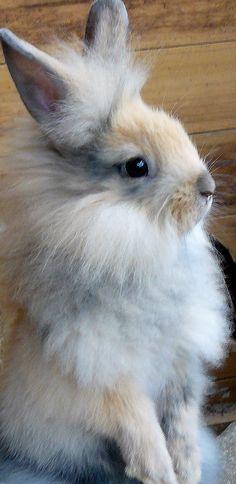 Modern Fairytale | Alice in Wonderland | The Rabbit | Jamie B
