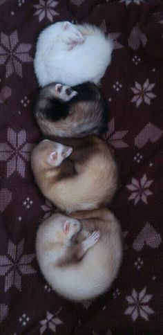 Oh my goodness my babies look like the two In the middle :3