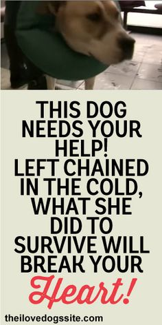 This Dog Needs Your Help! Left Chained In The Cold, What She Did To Survive Will Break Your Heart!