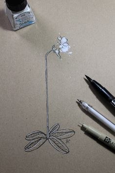 "Day 15: Pinguícula (Grasilla pálida) ""Pinguicula lusitanica""  #InkTober #InkTober2016 #InkToberEspaña #FloraDaGaliza Inktober, Plants"