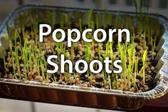 A woman pours popcorn into a casserole dish, but wait until you see her awesome garden idea!