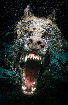 Amazing Underwater Dog Photography by Seth Casteel