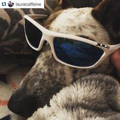 Monday has us like...  #Repost @lauracaffeine ・・・ Of course, Arthur had to try on the @xx2i USA1's. He looks pretty sharp! #bibchat #xx2i #BibRavePro #bibravepup #arthur