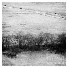 Trees - by Attila Simon