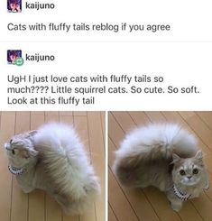 25 Wholesome Memes for a Perfect Wholesome Wednesday - Wholesome Memes Funny Animal Memes, Funny Animal Pictures, Cat Memes, Funny Cat Photos, Funny Memes, Cute Little Animals, Cute Funny Animals, Funny Cute, Cats Diy