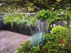 The addition of these pots creates an inner city sanctuary for its owners Landscape Design, Garden Design, Construction Firm, Rooftop Gardens, Potted Plants, Service Design, Planter Pots, Succulents, Exterior