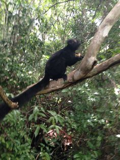 #lemure nero