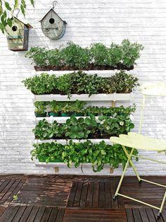 Jardín vertical hecho con canaletas plásticas