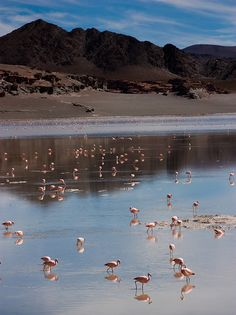 Catamarca, Argentina Cool Places To Visit, Places To Travel, Places To Go, Places Around The World, Around The Worlds, In Patagonia, Romantic Destinations, What A Wonderful World, Lake District