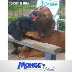 Gigio e Bea #Mongesfriends