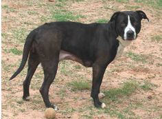 grey Tuesdays Tails #34:  These Dogs Need A Home!