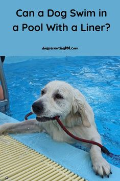 Are all pools okay for dogs to swim in, or can your dog actually ruin your pool? #dogswimming #swimwithyourdog #dogsafety Pet Sitters International, Dog Ramp, Group Of Dogs, Cute Dog Photos, Dog Safety, Old Dogs, Ruin, Dog Friends, Pet Care