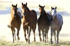'Pferde-Quartett' von Dirk h. Wendt bei artflakes.com als Poster oder Kunstdruck $18.03