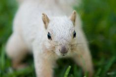 "UT ""albino"" squirrel = good luck on test day."