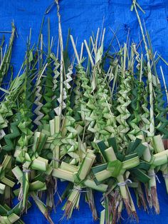 Palm Sunday....my mom always used to make palm crosses for church...