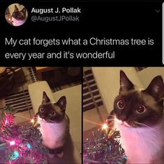 Cat Dreams Are Made Of Memes (Who Are We To Disagree) - World's largest collection of cat memes and other animals Funny Animal Jokes, Cute Funny Animals, Funny Animal Pictures, Funny Cute, Cute Cats, Clean Animal Memes, Big Cats, Memes Gifs, Cat Memes