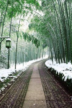 Bamboo path Japan - Nice road