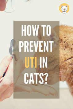 "Are you worrying about UTI in your lovely cats? Is UTI making your cats unhealthy? If yes, do not miss ""How to prevent UTI in cats? Cat Care Tips, Cat Behavior, All About Cats, Cat Facts, Cat Health, Health Advice, Health And Safety"