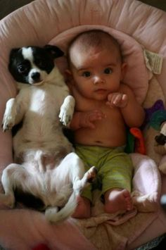 Chihuahua and his Baby. Or Baby and his Chihuahua? :D - chihuahua, Love My Dog, Puppy Love, Cute Baby Animals, Funny Animals, Funny Photos, Cute Pictures, Kid Photos, Random Pictures, Funniest Pictures