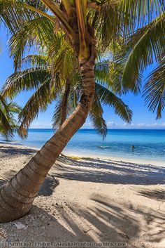 Palm trees and white sand beach on Laughing Brid Caye National Park, is a small isle 11 miles off the coast of Belize | Patrick J Endres