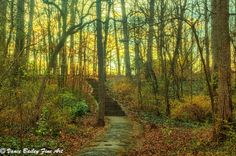 """Golden Stairway"" at Miller Park in Winston-Salem, nC"