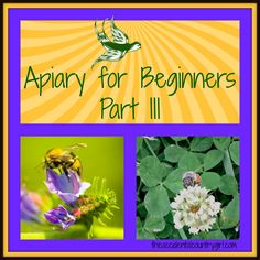 Apiary for Beginners: Part III -- In a perfect world, everything goes as planned and the bees quietly go about their work and produce that coveted honey. However, sometimes things go awry. If you aren't new to this life of producing at least some of what you need, you know that the best laid plans can be upended by things as s...