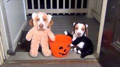 Halloween - sad holiday