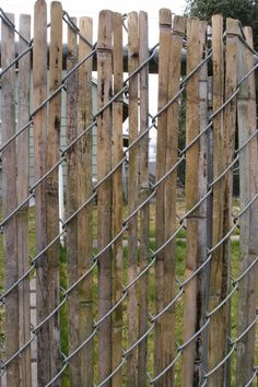Weaving strips from an old bamboo fence thru a chain link fence instead of using plastic strips. Great idea!