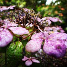 #nature #finistere #bretagne #colors #color #couleurs #couleur #fleur #fleurs #flower #flowers #bzh #bretagne #breizh #ete2015 #ete #sun #soleil #bretagnetourisme #combrit #picoftheday #summer #jaimelabretagne