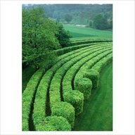 Hedges and topiary with a wow factor! Garden Hedges, Topiary Garden, Garden Art, Garden Plants, Garden Landscape Design, Garden Landscaping, Formal Gardens, Outdoor Gardens, Amazing Gardens