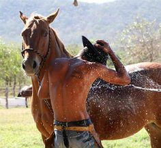 :-) great horse!!!!! HEHE!!!!  GIRLS GO NUTS FOR WRANGLER BUTTS!