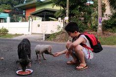 Caridade com os animais.