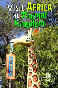 Pin this if you plan to visit Africa in the Animal Kingdom. This includes an overview of what you'll find.