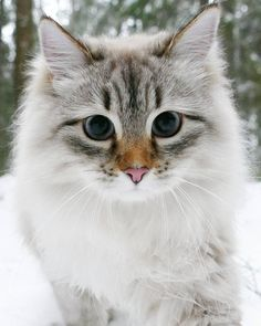 Flora is my favorite internet famous cat ever ❤️❤️❤️ and like OMG! get some yourself some pawtastic adorable Animals And Pets, Baby Animals, Funny Animals, Cute Animals, Cute Cats And Kittens, Cool Cats, Kittens Cutest, Pretty Cats, Beautiful Cats