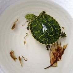 lye-8  Aquatic wildlife painted in layers of acrylic resin!