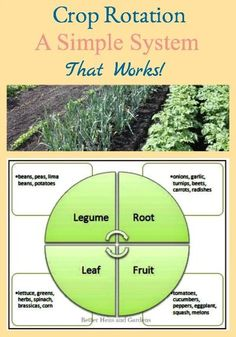 Describes a simple system for rotating crops in your homestead garden