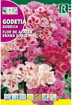 Egynyári virágok : Nyári Azálea törpe teltvirágú Cabbage, Vegetables, Female Dwarf, Gardens, Cabbages, Vegetable Recipes, Brussels Sprouts, Veggies, Sprouts