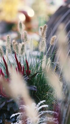 Eerie Photography, Nature Photography Flowers, Aesthetic Photography Nature, Nature Aesthetic, Autumn Photography, Beautiful Photos Of Nature, Beautiful Gif, Amazing Nature, Beautiful Landscapes