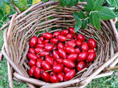 How to Make Raw Rosehip Syrup. Easy No-cook Recipe. • Craft Invaders Gin Recipes, Cooking Recipes, Rosehip Syrup, Garlic Chips, Cordial Recipe, Vegetable Crisps, Wild Garlic, Crisp Recipe, Red Fruit