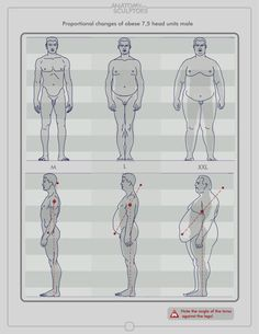 Enjoy a collection of references for Character Design: Male Anatomy. The collection contains illustrations, sketches, model sheets and tutorials. Male Figure Drawing, Figure Drawing Reference, Body Drawing, Anatomy Drawing, Anatomy Reference, Male Drawing, Drawing Process, Anatomy Study, Character Design Cartoon