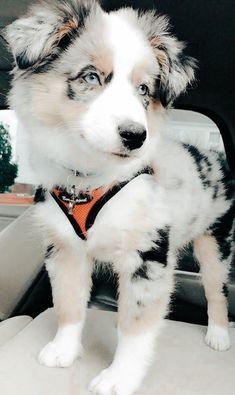 Super Cute Puppies, Baby Animals Super Cute, Cute Baby Dogs, Cute Little Puppies, Cute Dogs And Puppies, Cute Little Animals, Cute Funny Animals, Baby Cats, Doggies