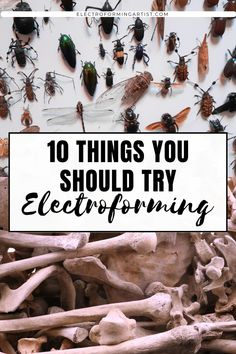 What can you electroform? If you're wondering, read this post to get 10 ideas of awesome things to put in your bath! #electroforming #electroformingjewelry #copperelectroforming #electroformingtutorial Types Of Feathers, Copper Paint, Wire Wrapping Crystals, Dry Leaf, Awesome Things, Jewelry Making, Diy Crafts, Bath, Canning
