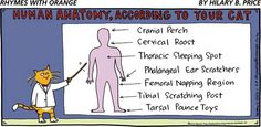 ''Human Anatomy - According To Your Cat'' source: Sir Thomas, Knight of the Kind Thoughts Thinking Circle (aka T.)