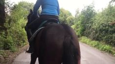 September 2019 Charlie has not been handled, groom, led, caught, touched in any way for the last two weeks. Its not our usual routine with trainees but . Horses, Horse
