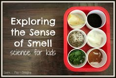 Learning about the Five Senses Last fall I did an All About Me unit with my boys, JZ (5) and J-Bug (3).  Our favorite activities w...